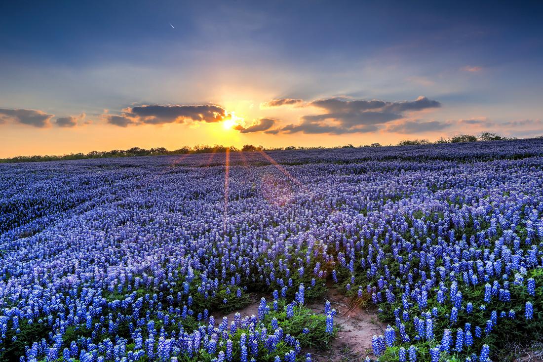 Wildflower Sunset at Muleshoe Bend (8)