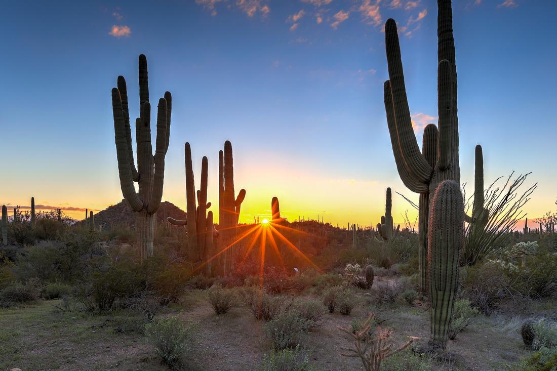 Saguaro National Park, AZ (30)