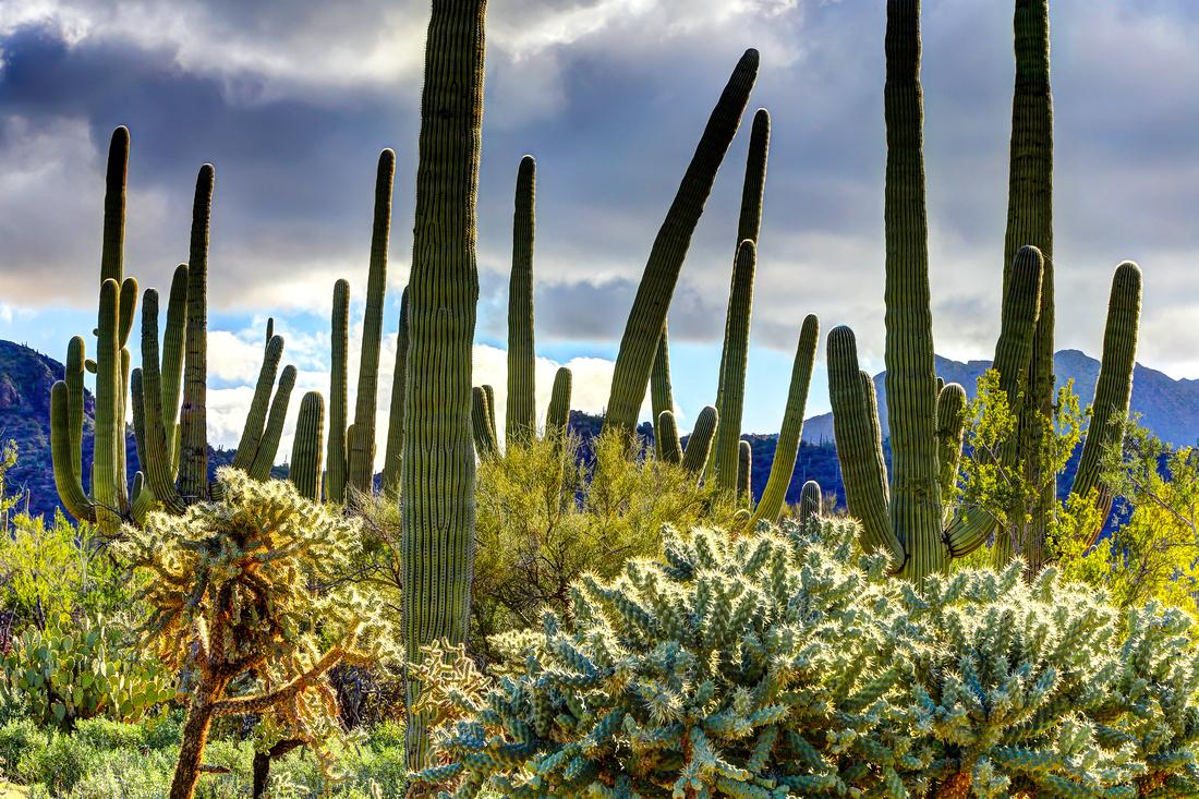 Saguaro National Park, AZ (7)