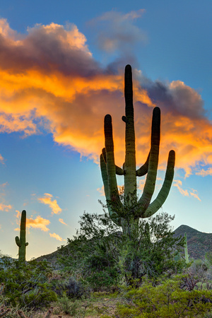 Saguaro National Park, AZ (1)