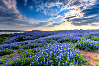 Wildflowers Texas Hill Country 2015